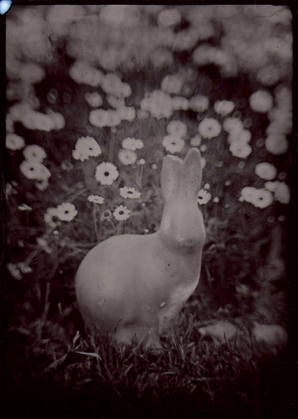 Rabbit Wetplate