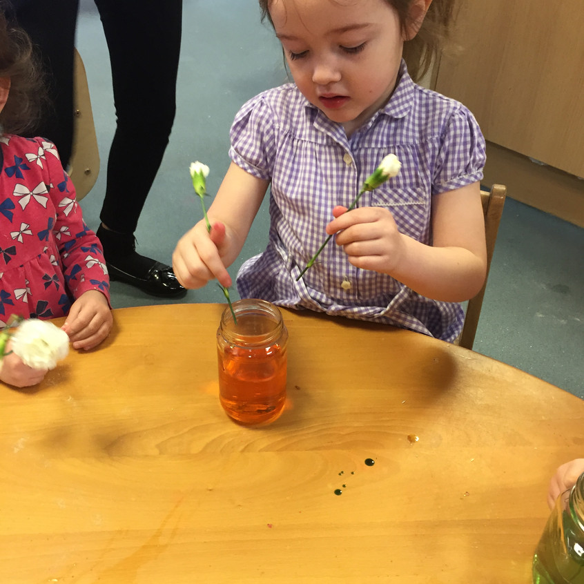 food colouring experiment (13)