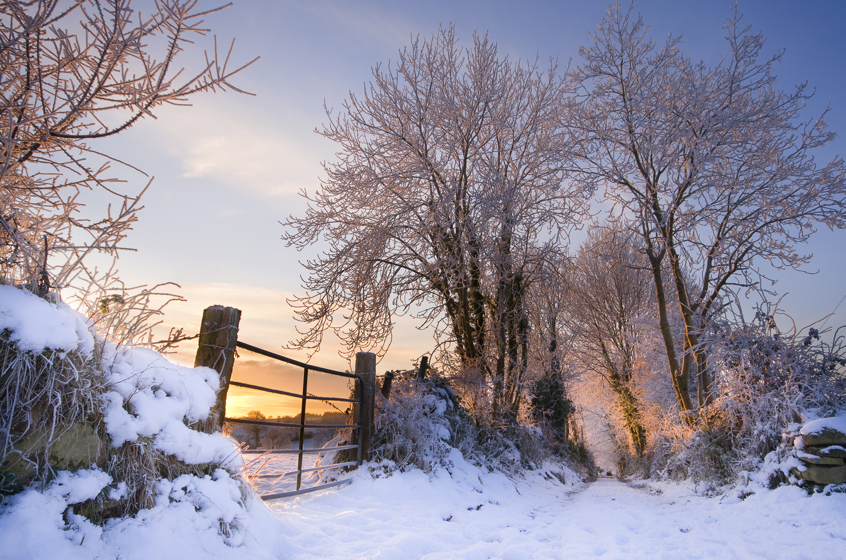 december-dawn-boyle_4228695281_o