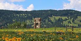 wagon box wildflowers (4).JPG