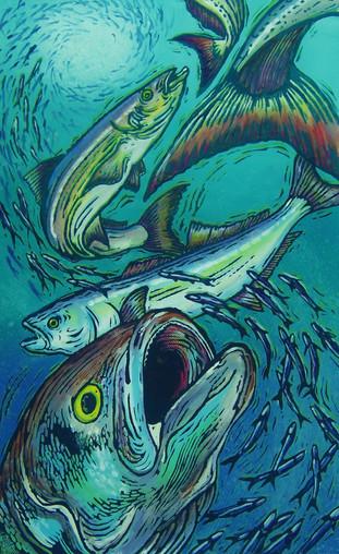 Morrison Bluefish.jpg