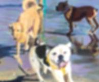 4 Doggy Delight.jpeg
