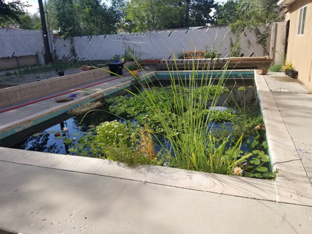The Cement Pond