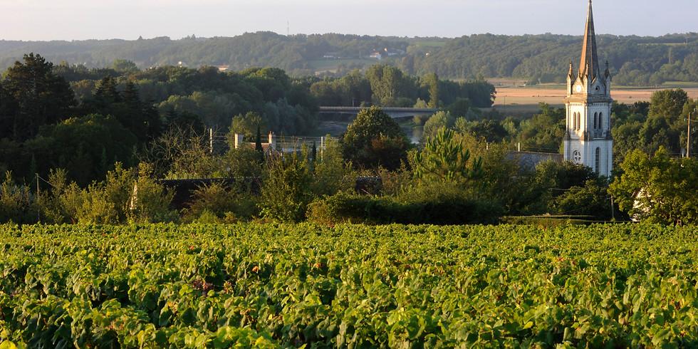 The Art of Tasting Loire Valley Wines - 細味盧瓦爾河谷葡萄酒的藝術