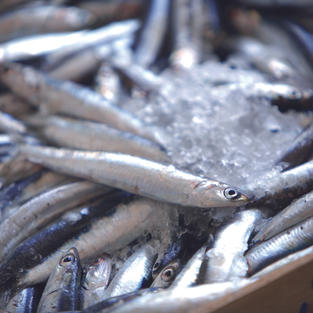 French Fish