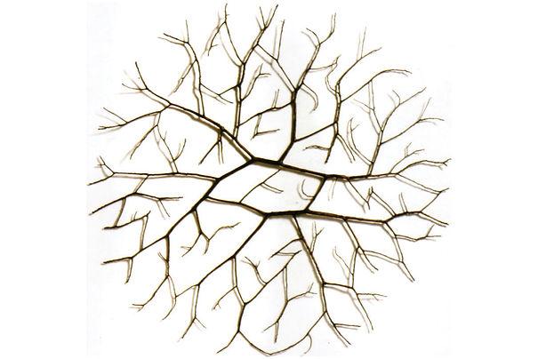 Fallen Branch Hossein Valamanesh.jpg