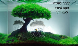 11-1210_הייקו ענבר