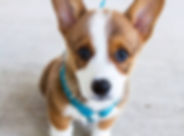 Petite/Medium Dog
