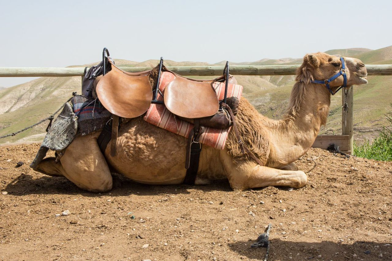 Ready for a Camel Ride