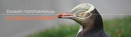 Dn Ophthalmology Web Banner 13.jpg