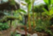 CroppedImage555425-forest-01.jpg