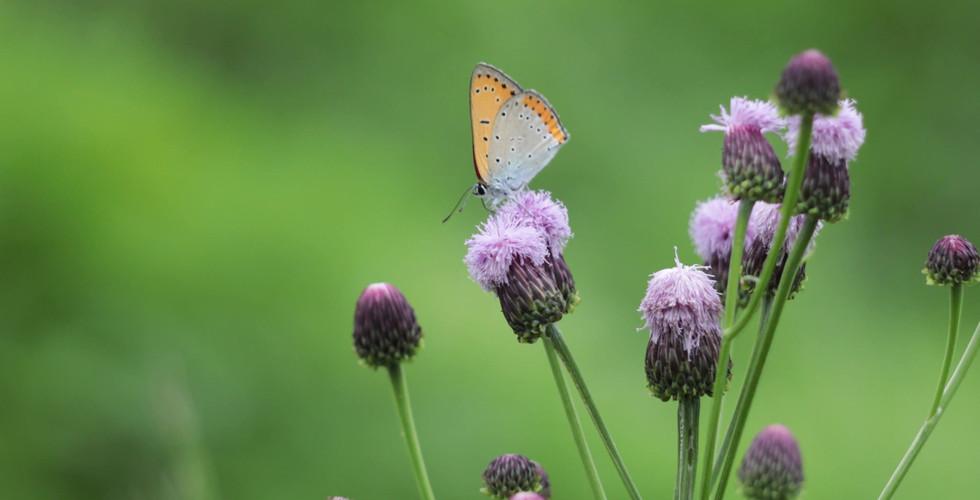 Wildflower---41207.mp4 (LLD).mp4