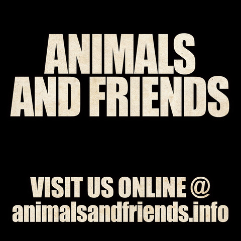WELCOME TO THE NEW ANIMALS AND FRIENDS WEBSITE