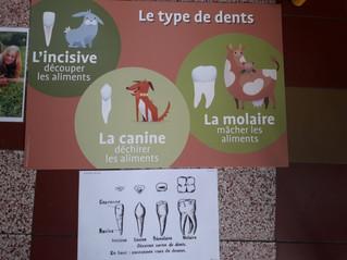 P1: Animation sur le brossage des dents