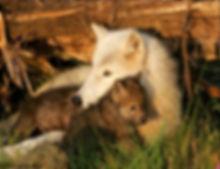 Chenoa with Sakari pups.jpg