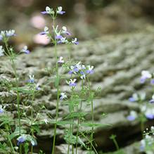 wnf nature.jpg