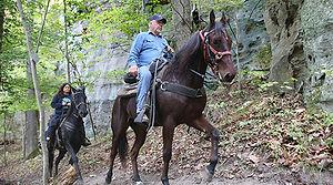 wnf horse2.jpg