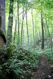 wnf trail2.jpg