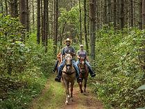 wayne_national_forest__medium.jpg