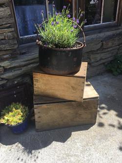 boxes 10 asstd $5