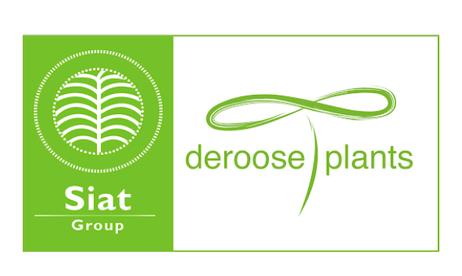DeRoose%20Plants.png