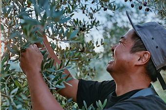 kaisan_olive0101.jpg