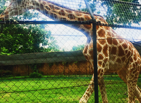 Animal Love | Ibadan Zoo