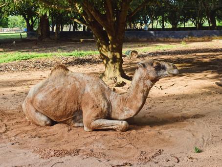Another Nigerian 'Zoo' | University of Ilorin Zoo