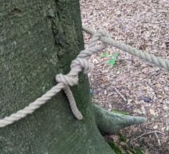 Knot work at the Forest School training, this is a timber hitch.
