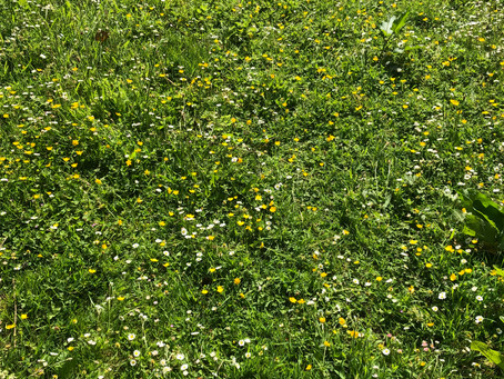 One of the children came out onto the meadow and declared Buttercup world!
