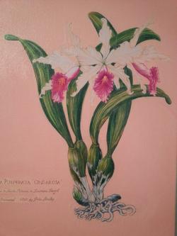 Hilo Orchid Society, Hilo Hawaii 967