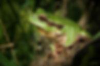 amphibian-animal-close-up-48790.jpg