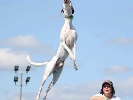 The Dog That Can Fly Like A Missile