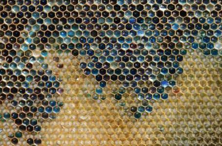 Bees Make Blue And Green Honey