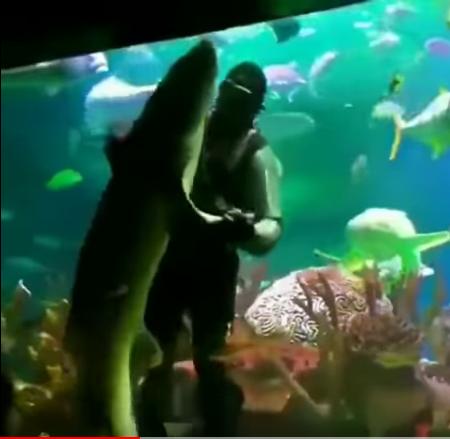 Man Waltzes With Predator Shark