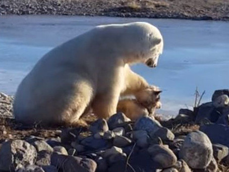 Polar Bear Petting a Dog?