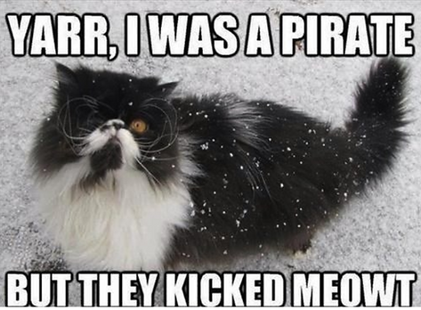 Cat Pirate Meme