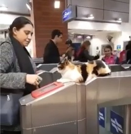 Cat working as ticket checker at train station
