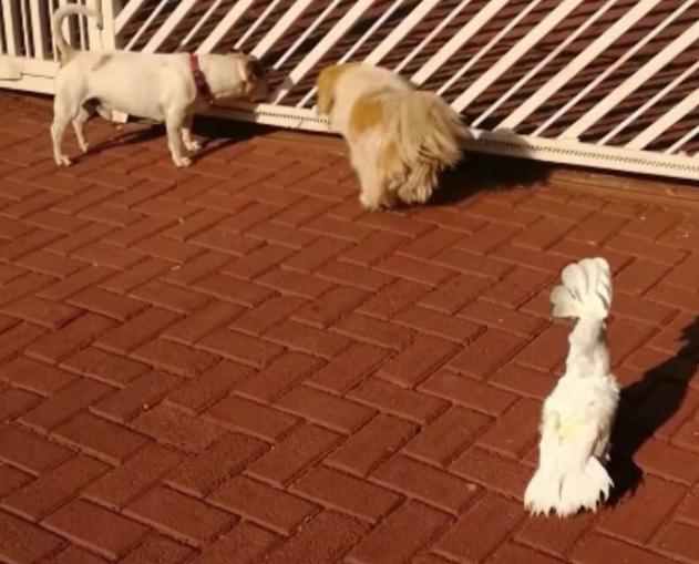 Bird barking like a dog!
