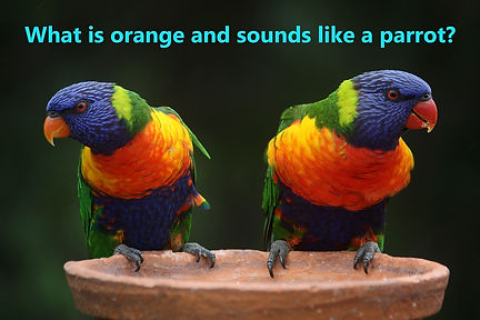 Funny Riddle About A Parrot