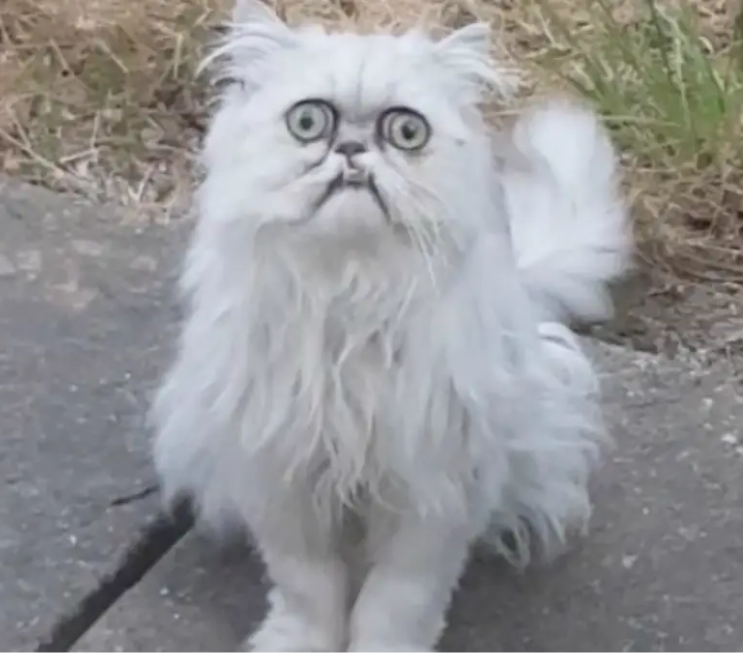 Ma, theres a weird cat outside