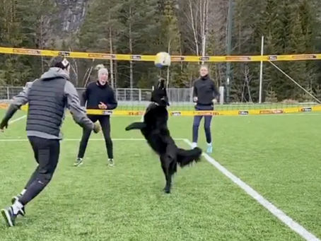 A Dog That Can Play Volleyball?