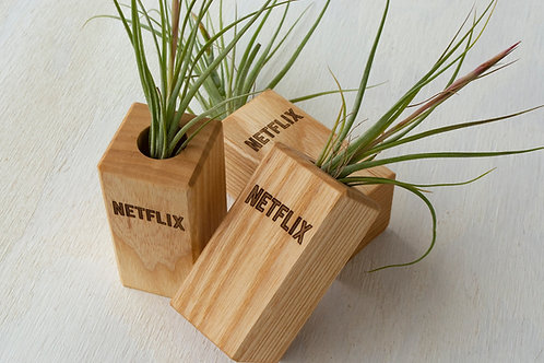 Air Plant with Wooden Holder