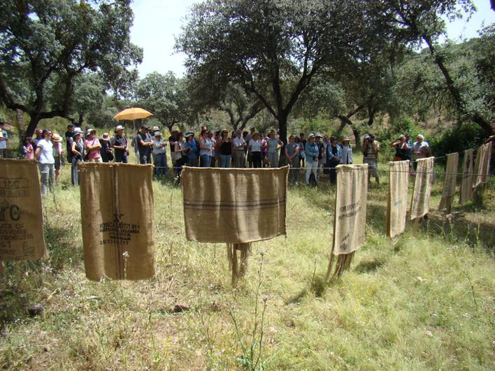 El Arreciado simposio de lana
