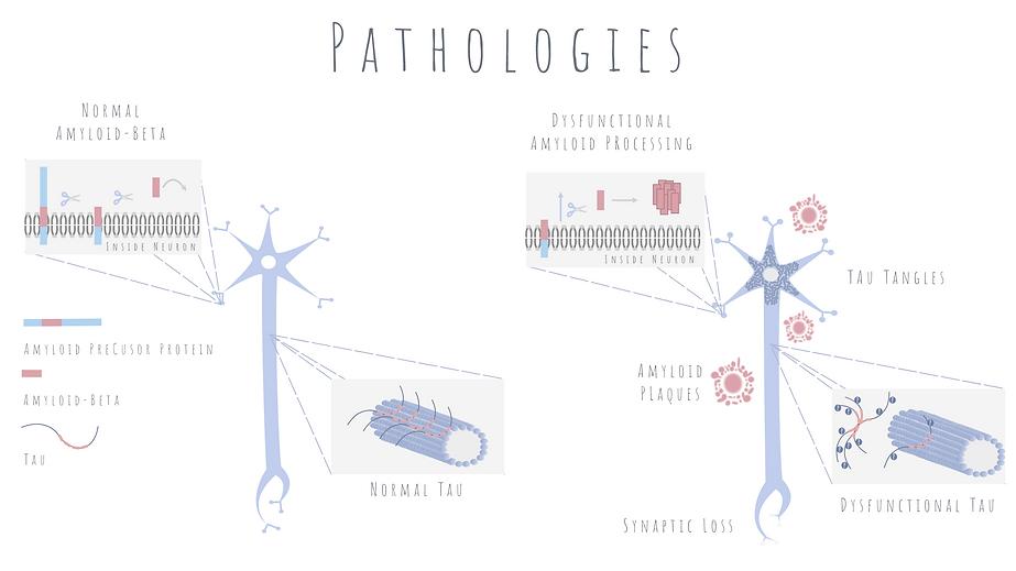 Pathologies web.png