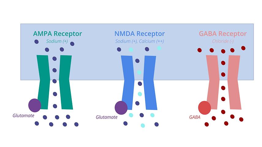 Receptors NMDA .png