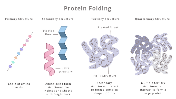 Protein oprocess.png