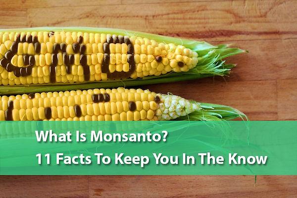 GMO Corn.jpg