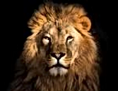 lion face_edited.png