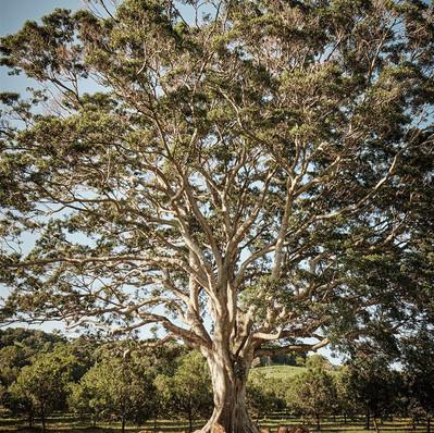 tides-orchard-007.jpg